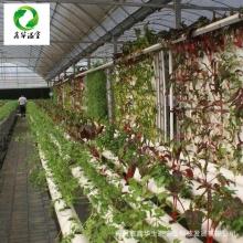 无土栽培种植 承接无土栽培设施项目 蔬菜水培管道专业生产定制